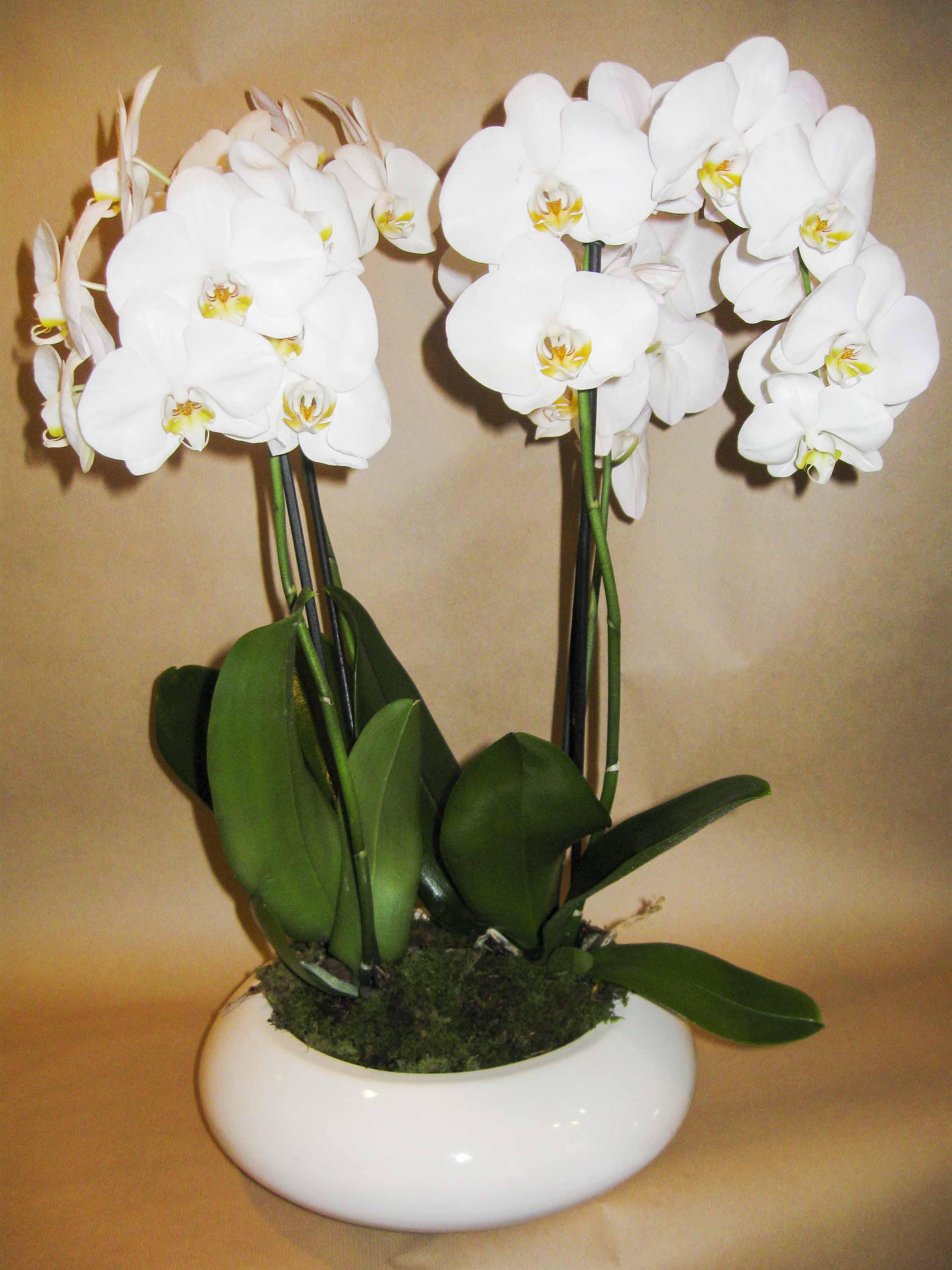 Decorazioni floreali per comunioni milano