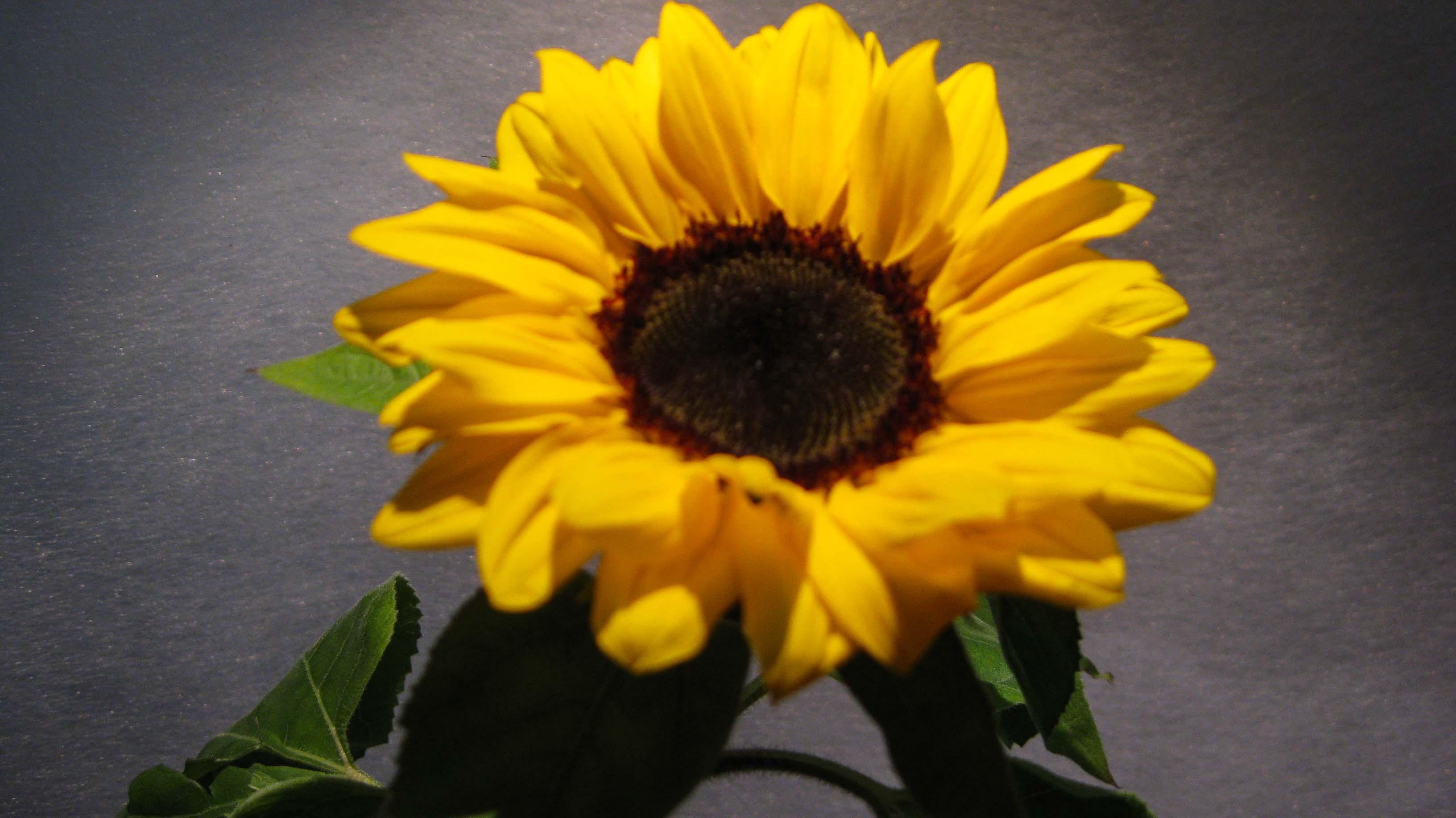 Consigli sul perchè scegliere i fiori di stagione –Trovare e comprare i fiori di stagione a Milano - piazza san babila - vicinanze duomo - milano centro