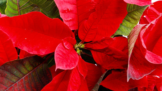 Come e quando innaffiare le piante e i fiori da balcone e da giardino a Milano